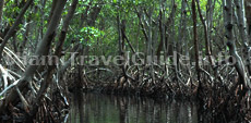 Places to go in Miami: Everglades National Park