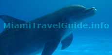 Places to go in Miami: Miami Seaquarium