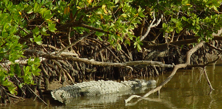 Everglades National Park - Atractions in Miami